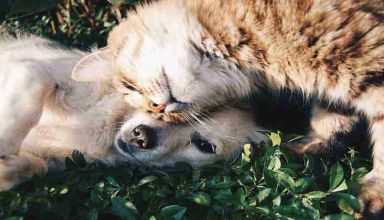 Localizzatore GPS per cani e gatti Vodafone Kippy